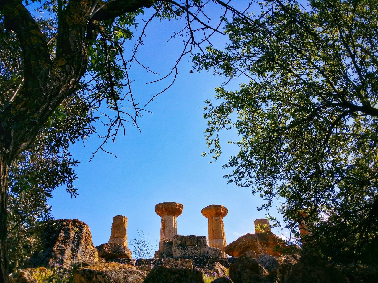 Valley Of The Temples Agrigento Sicily Italy Travel Photography Travel Voyage Traveling Mobile Photography Fine Art Architecture Greek Temples Columns Nature Tree Branches Mobile Editing Showcase April