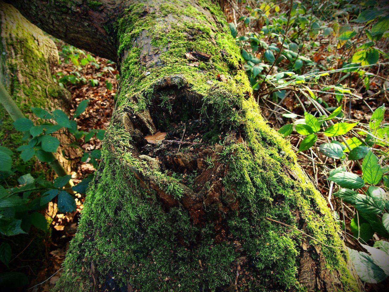 Moss. Nature Forest Green Color Tree Trunk Steve Merrick London Zuiko Stevesevilempire Olympus Hampstead Heath
