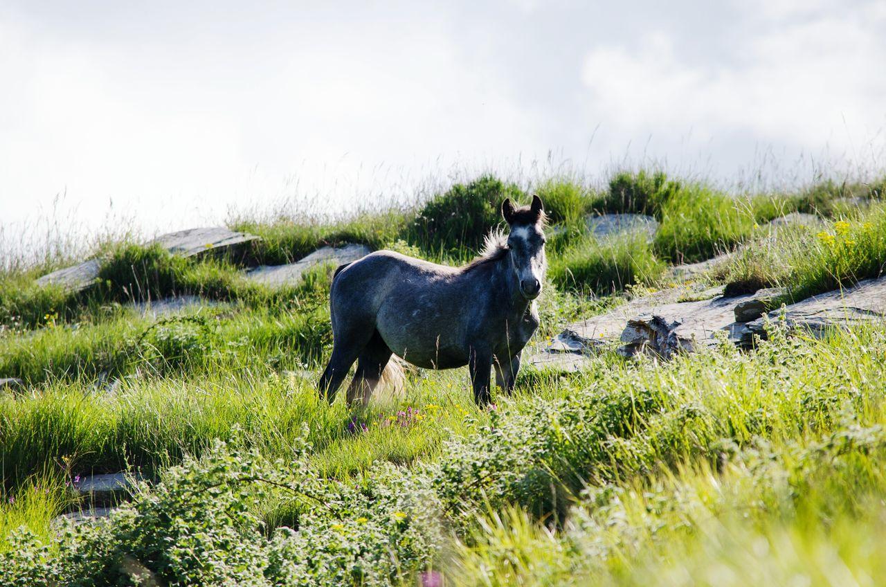 Cavallo Horse Outdoor Nature Natura Trekking Animals Walking Free Wild