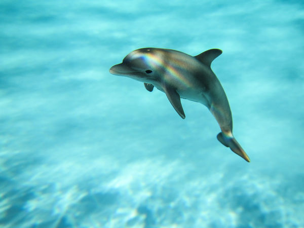 Animal Themes Aquatic Mammal Beauty In Nature Blue Close-up Dolphin Nature One Animal Schleich Sea Life Swimming UnderSea Underwater Water Sommergefühle