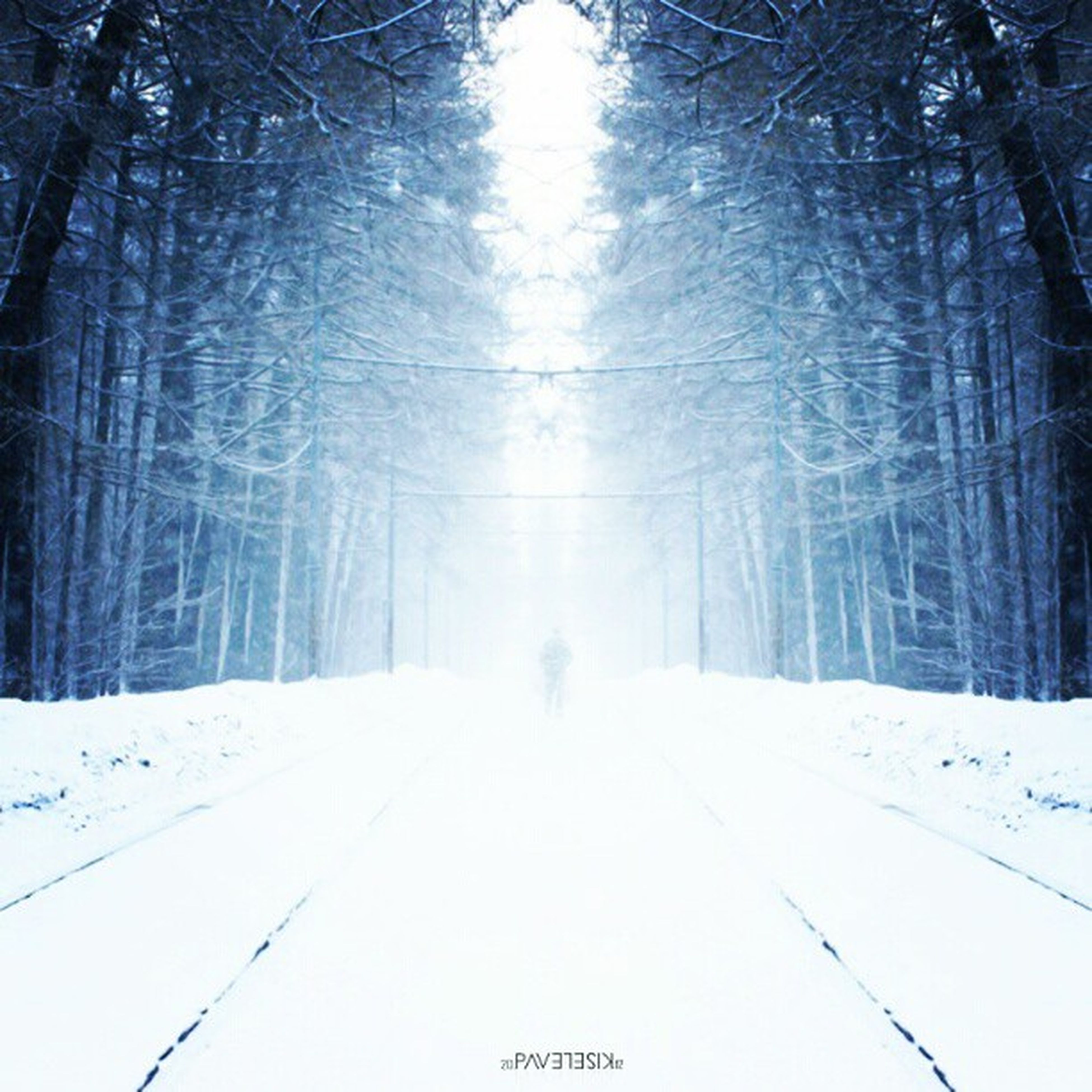 snow, winter, cold temperature, season, weather, tree, the way forward, covering, tranquility, forest, nature, tranquil scene, white color, bare tree, frozen, diminishing perspective, beauty in nature, covered, vanishing point, woodland