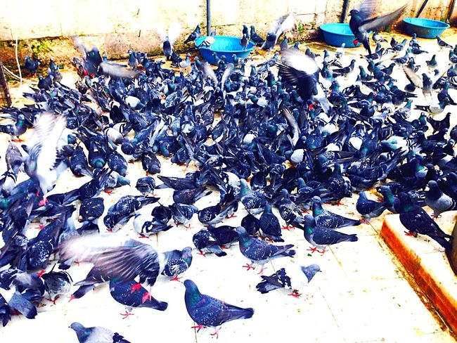 Capturing Freedom Birds Hello World Eye Em Around The World Traveling Streetphotography People Watching Enjoying The Sights Animal Photography Travel By Puk✈️