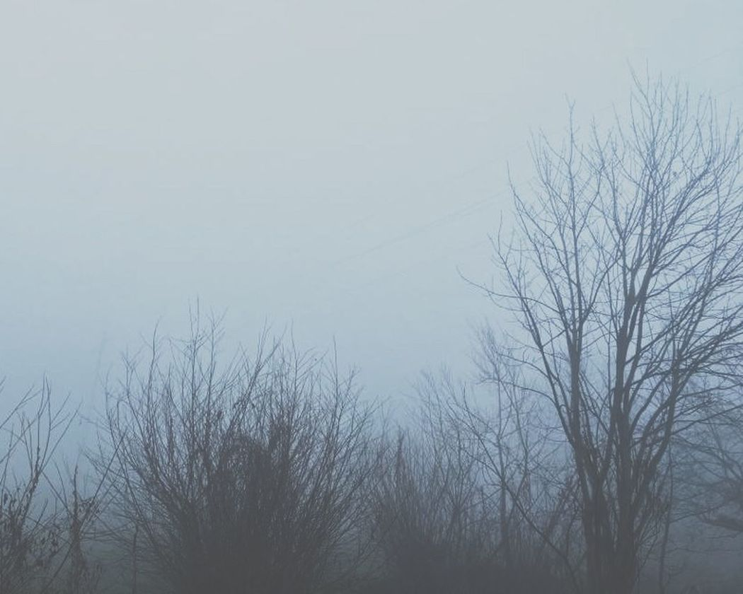 Fog Trees Cantsee Anything