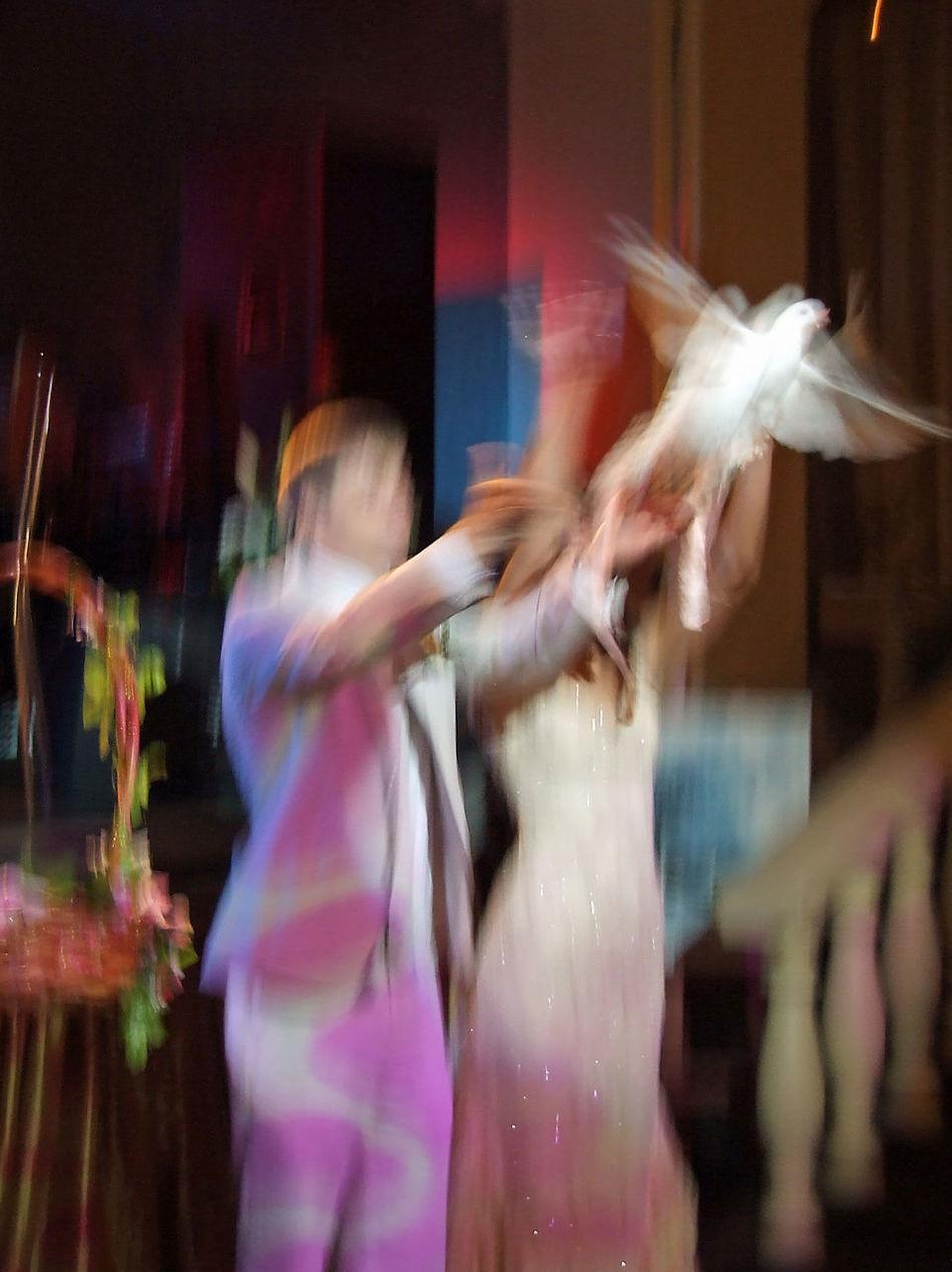 Good luck Feiern Flying Bird Focus On Foreground Hochzeit♥ Illuminated Lifestyles Taube Wedding White Color