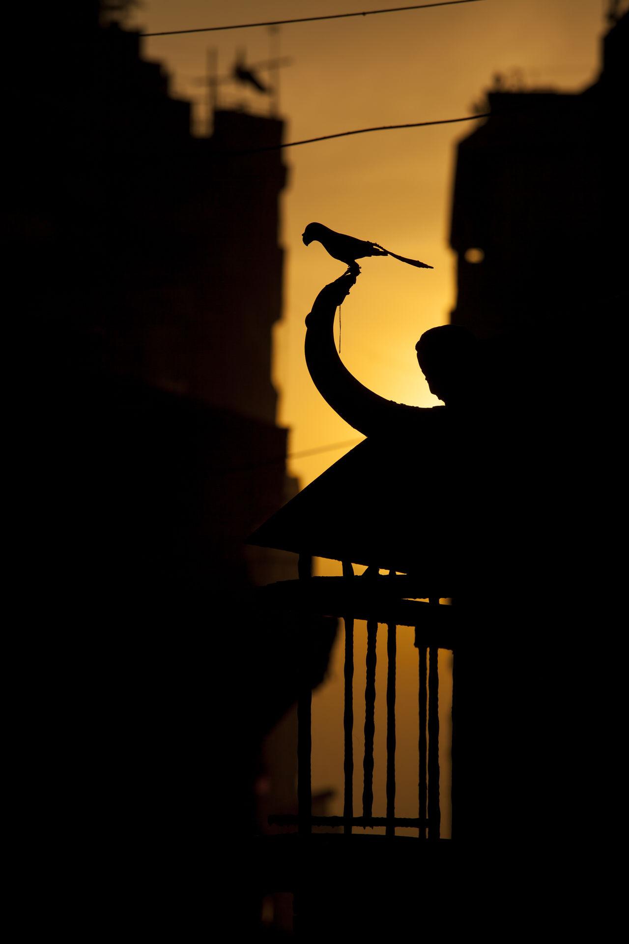 Silhouette of bird sculpture of a Hindu temple at Kathmandu, Nepal during evening. Animal Architecture Art Backlight Bird Evening Evening Light Kathmandu Nepal Sculpture Silhouette Sky Sunset Wanderlust Warm