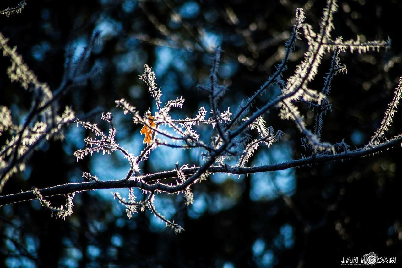 Nature No People Väterchen Frost Winter 2016 EyeEm Awards Plant Tree Outdoor Photography