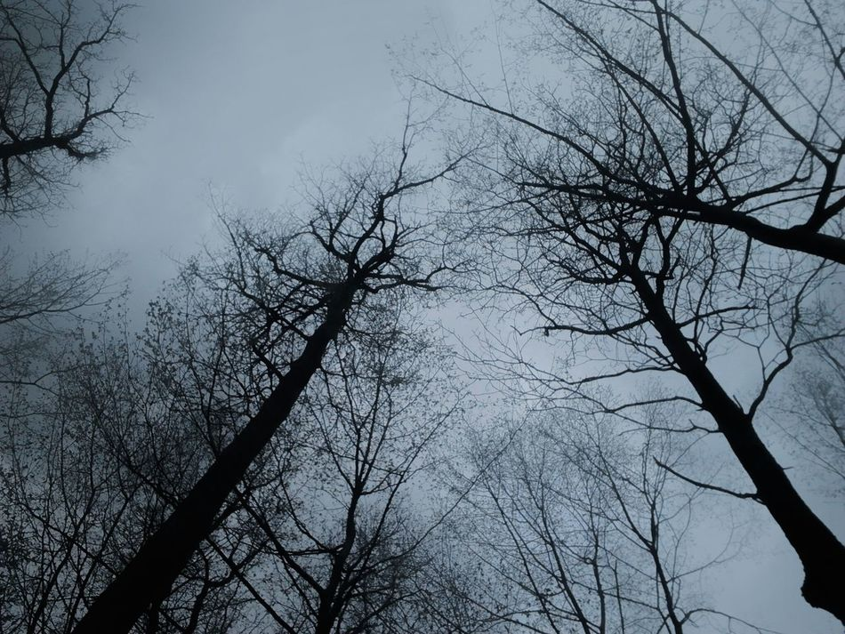 Walking in woods. Woods Trees Trees And Sky Sky Sky And Clouds Sky_collection Sky_collection Sadness Sad Sad Day Shitty Day