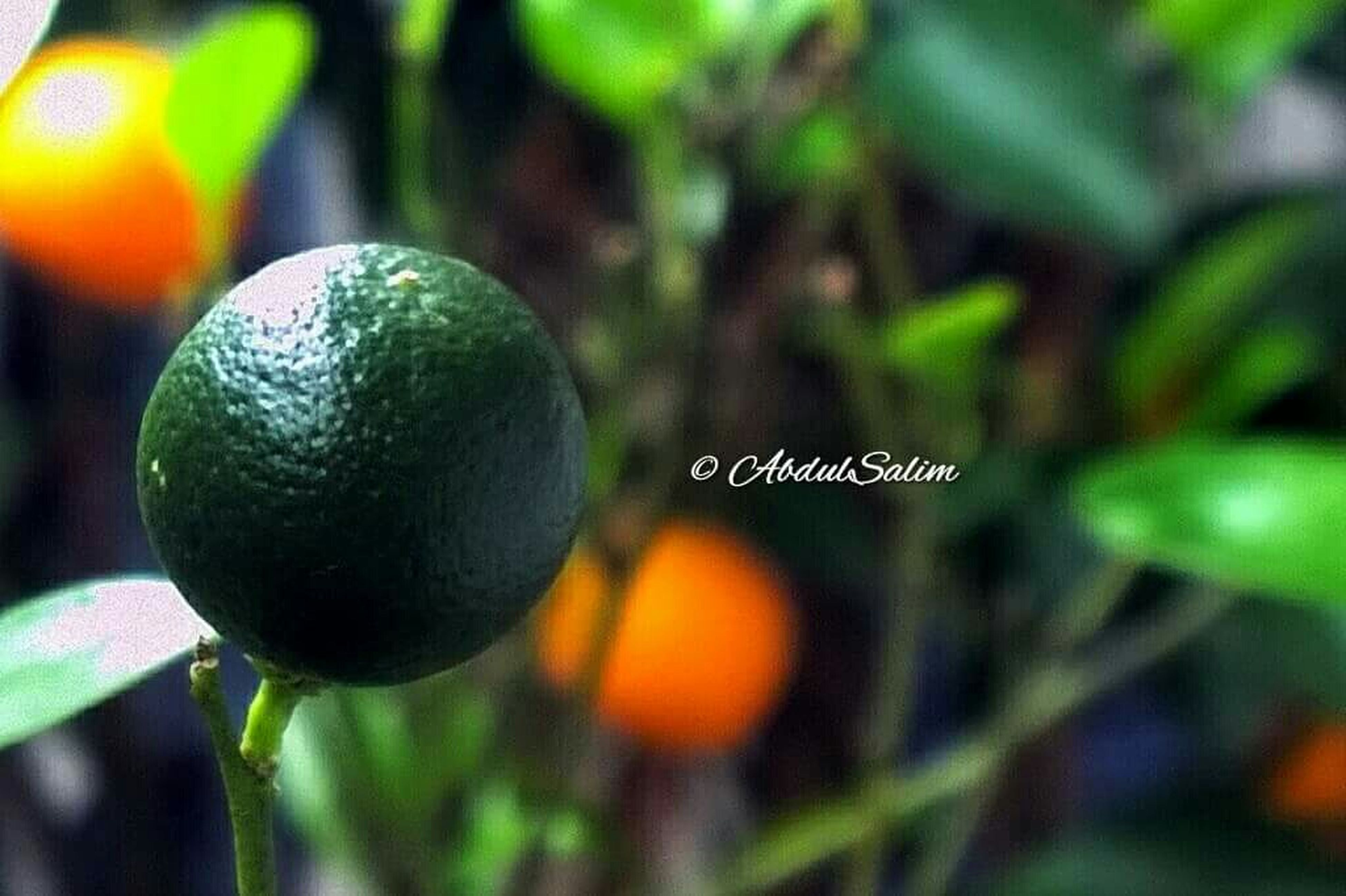 close-up, focus on foreground, green color, growth, selective focus, nature, plant, leaf, outdoors, beauty in nature, no people, grass, freshness, day, sphere, field, sunlight, green, tree, tranquility