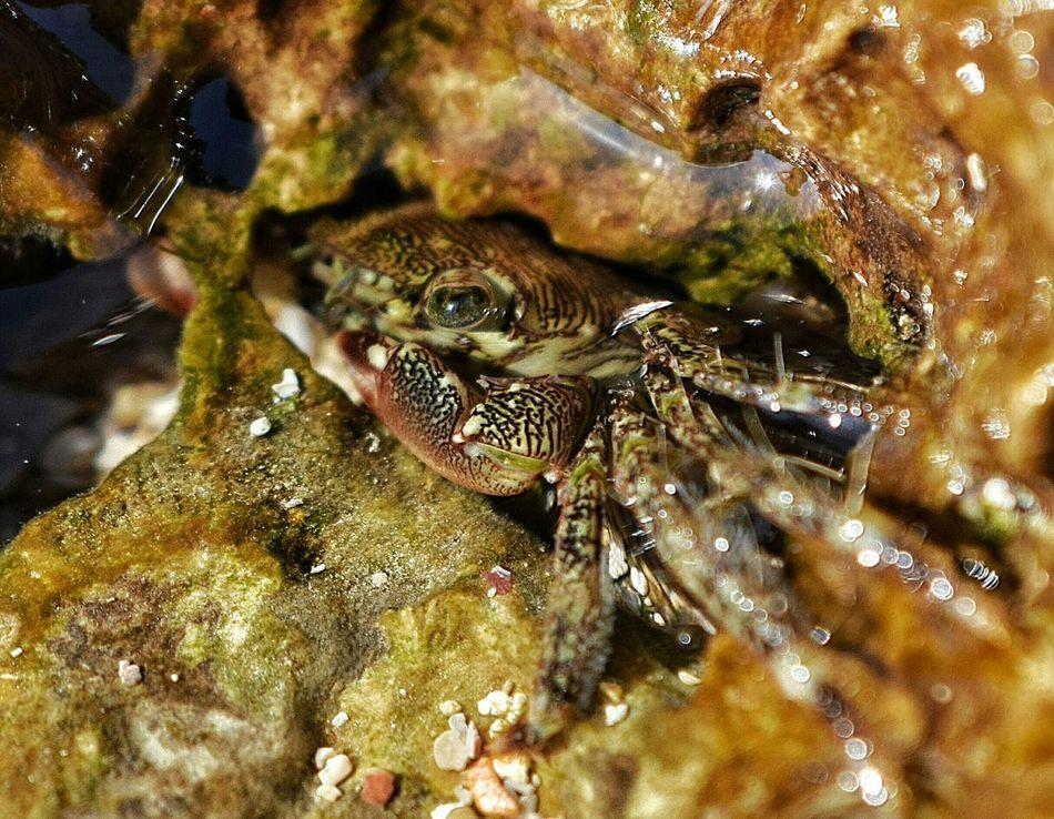 Crab Animals Sea Water Island