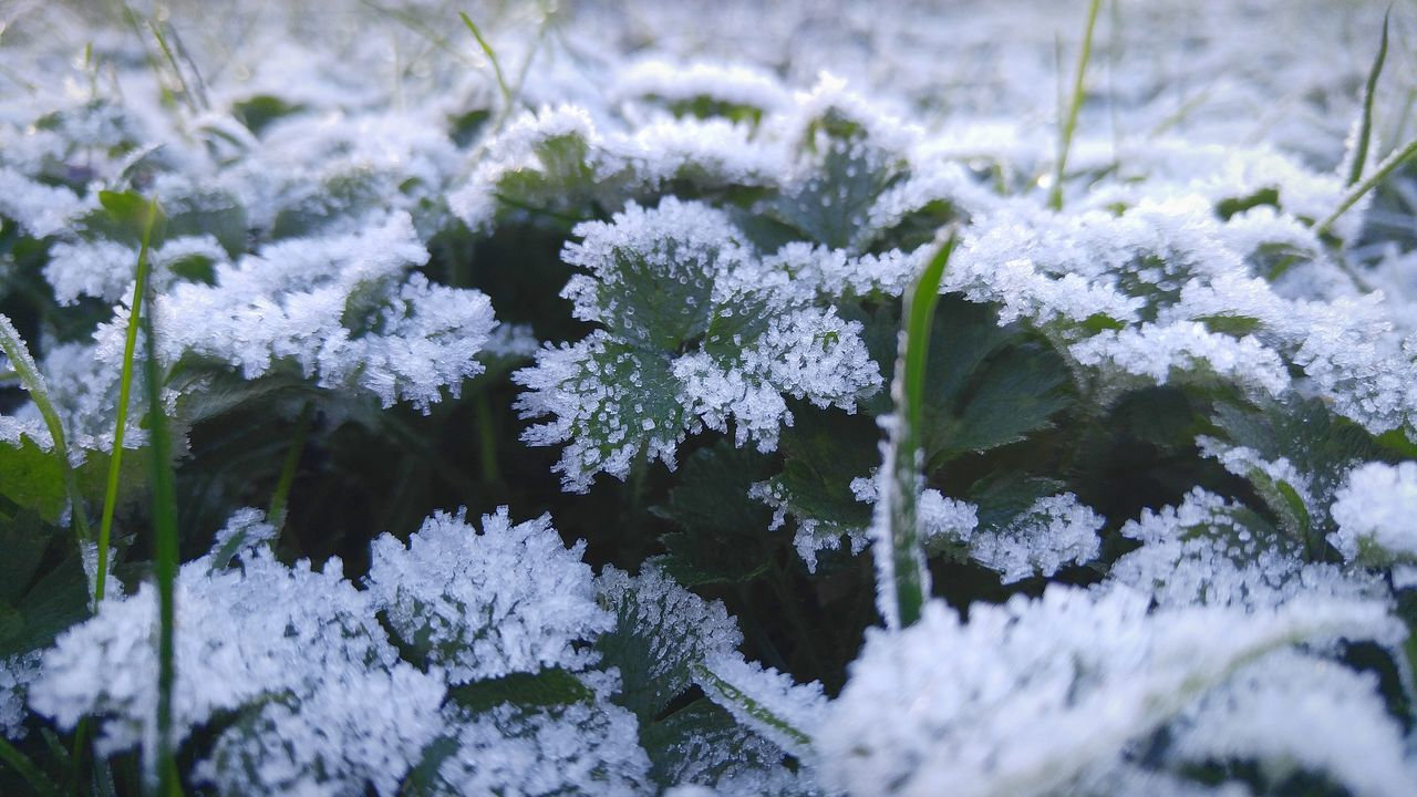 Morning Frost Grass Clover Frosty Mornings Winter Beauty In Nature