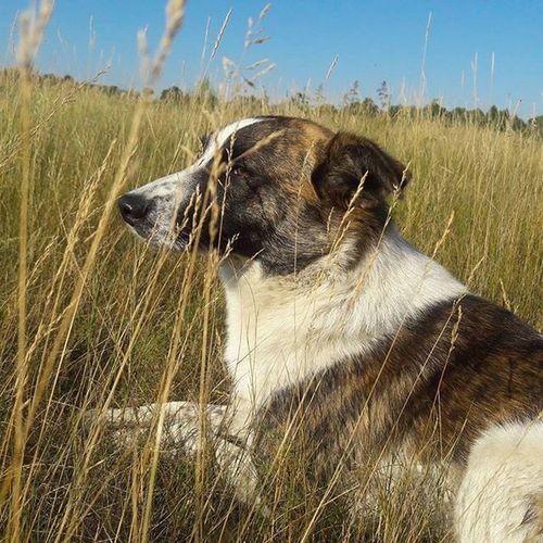 Наш пес туман) Tuman Dog