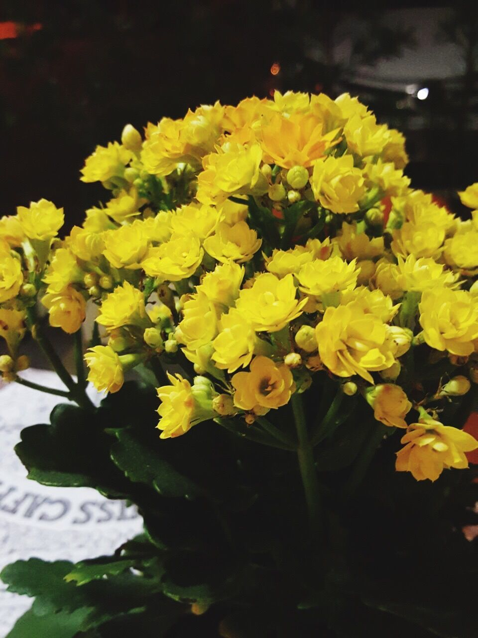 flower, nature, growth, beauty in nature, yellow, fragility, petal, freshness, plant, outdoors, no people, close-up, flower head, day