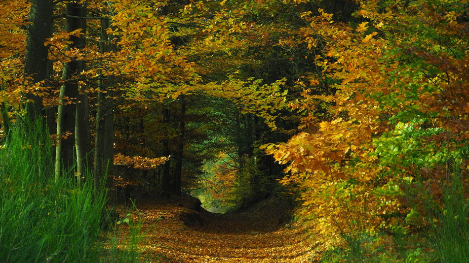 Autumn Autumn Leaves Beauty In Nature Forest Forest Path Forest Tun Forest Tunnel Nature No People Outdoors Tree