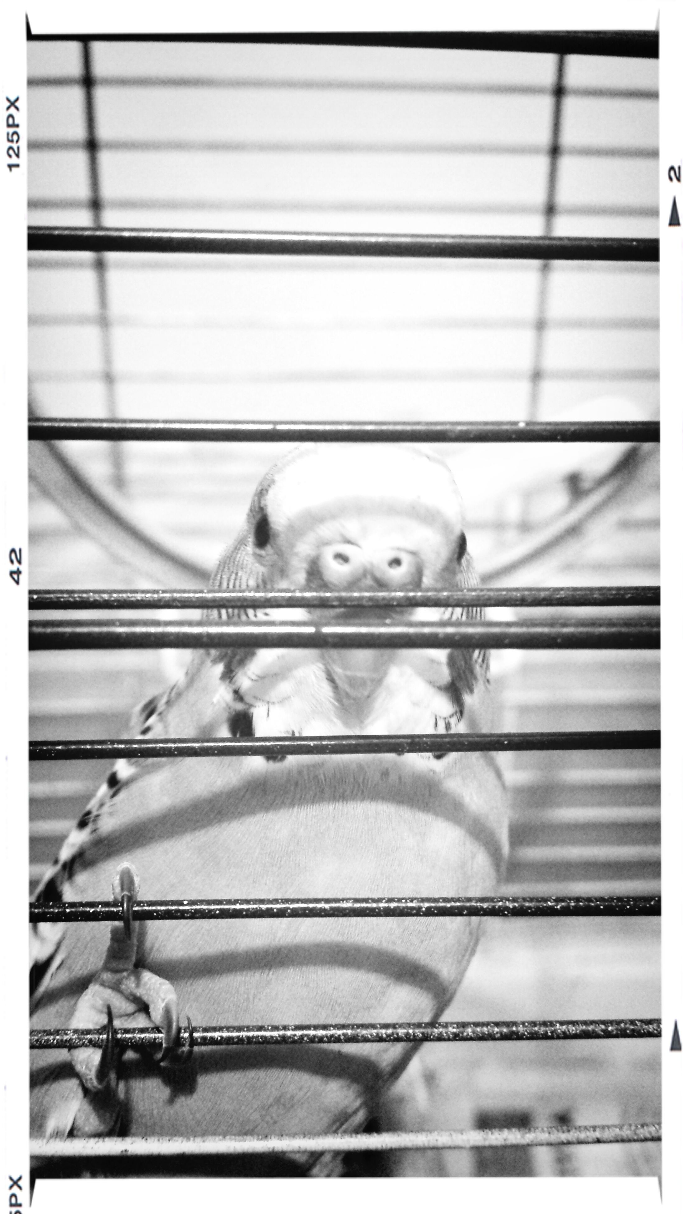 indoors, transfer print, animal themes, auto post production filter, one animal, close-up, metal, no people, high angle view, animal head, day, part of, cage, wildlife, pets, domestic animals, wall - building feature, portrait, railing, pattern