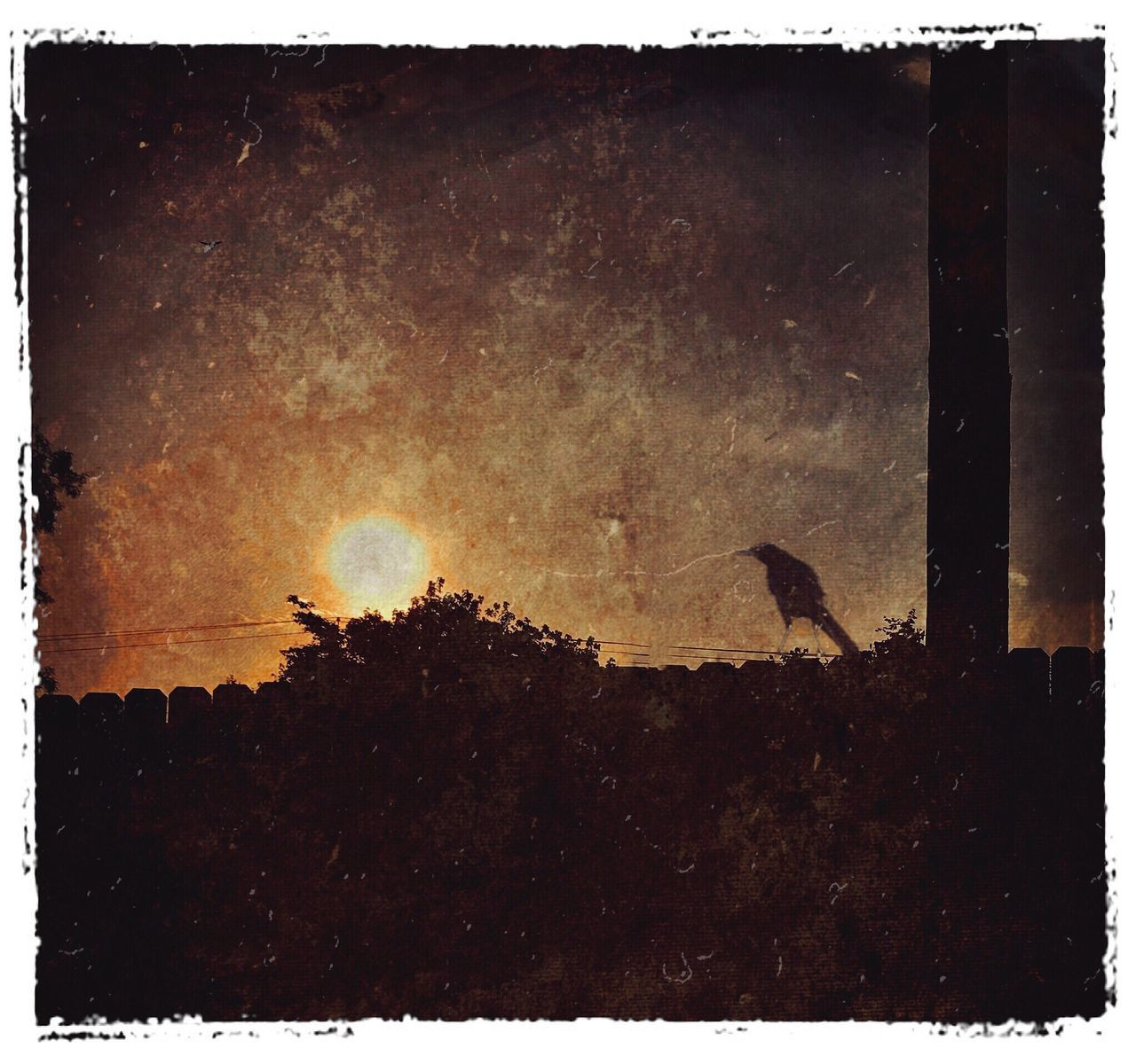 silhouette, sunset, animal themes, animals in the wild, nature, no people, outdoors, bird, tree, night, sky, beauty in nature, scenics, astronomy, galaxy