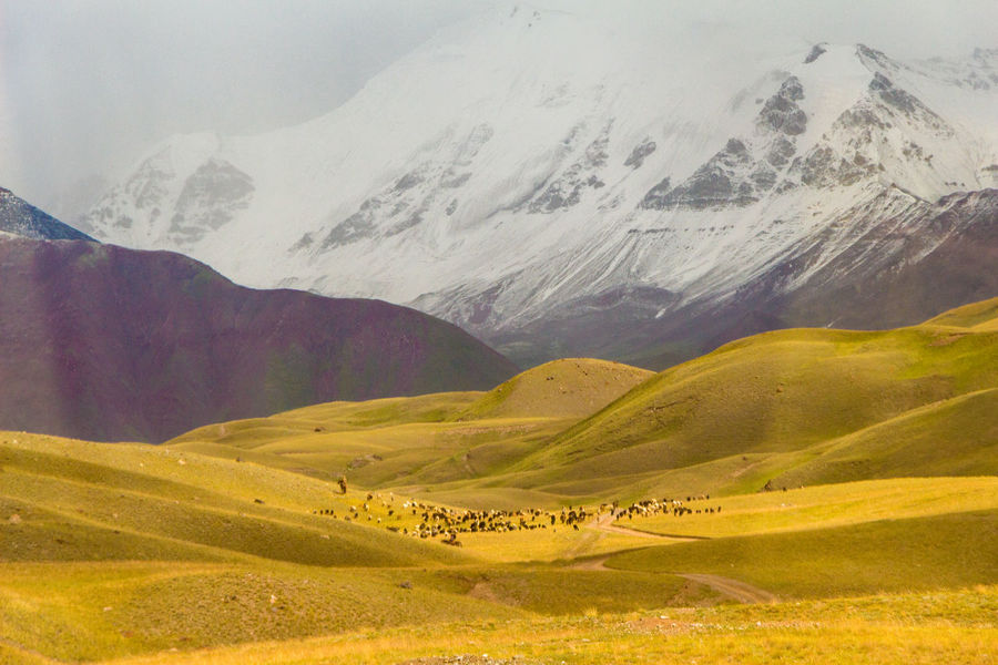 Kyrgyzstan Pamir Mountains Beauty In Nature Cold Temperature Day Domestic Animals Landscape Mountain Mountain Range Nature No People Outdoors Pamir Scenics Sky Snow Snowcapped Mountain Tranquil Scene Tranquility