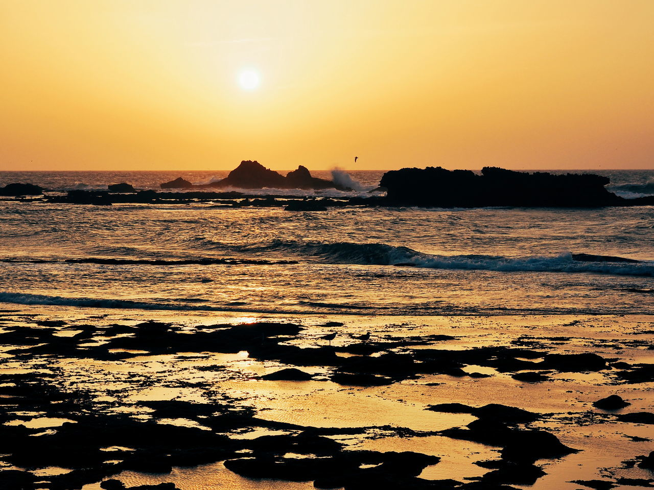 Sunset Water Beach Sea Outdoors Nature Beauty In Nature Sky Dramatic Sky Landscape Travel Destinations No People Gold Colored Bird Day Golden Hour Essaouira Essaouira Bay Waves Waves And Rocks Waves Crashing Morocco