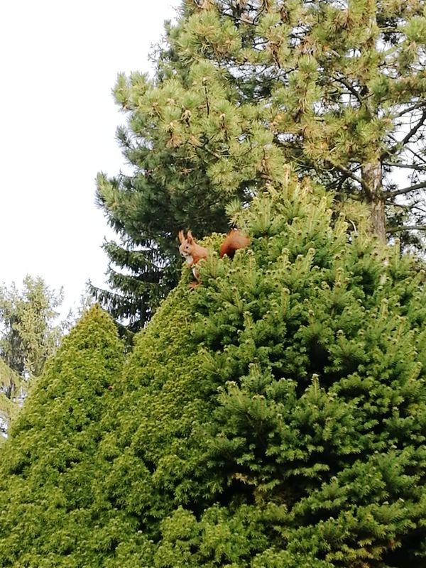 Besuch Eichhörnchen Squirrel Frühling