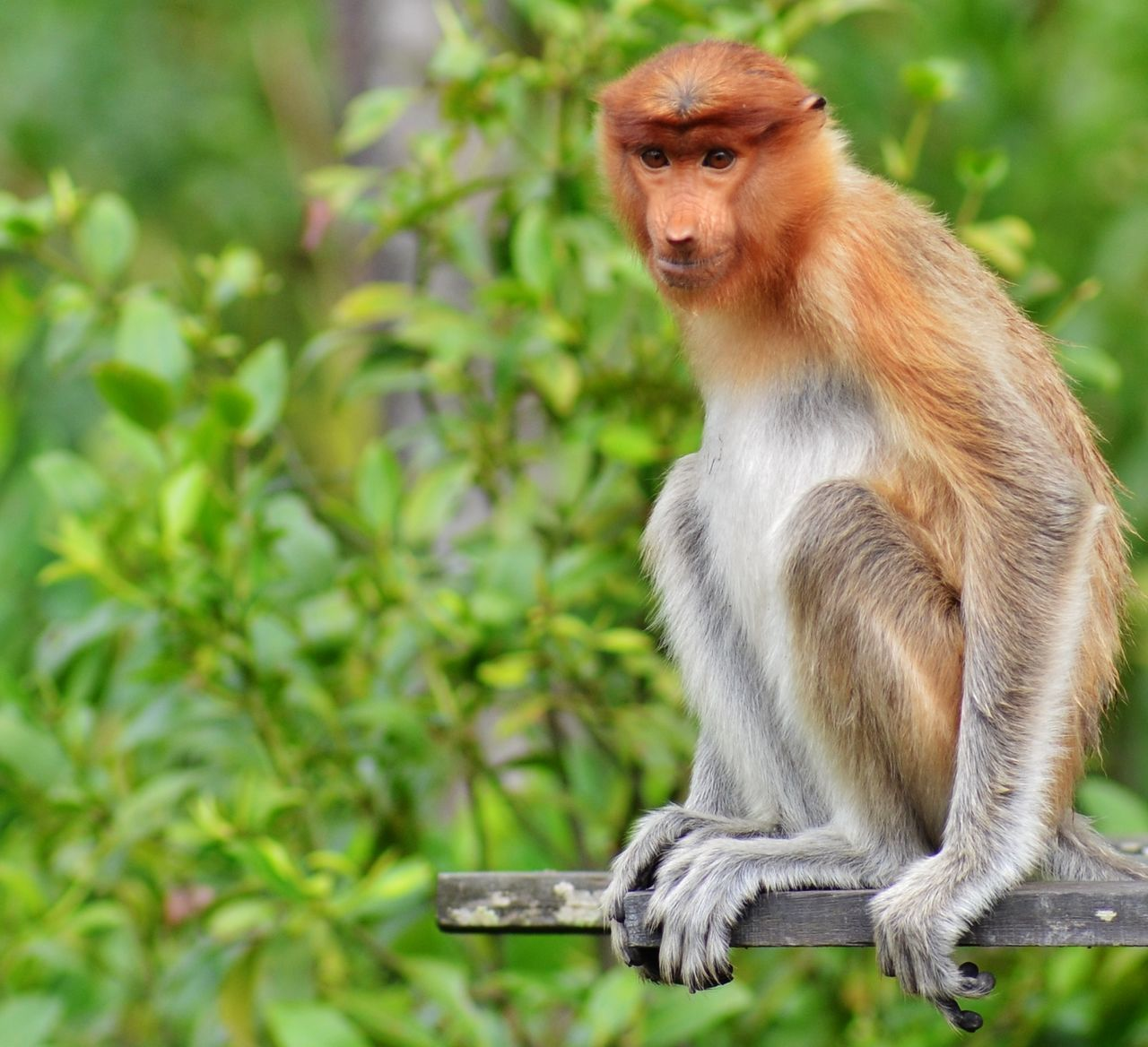 animals in the wild, monkey, animal themes, one animal, animal wildlife, mammal, day, no people, outdoors, focus on foreground, nature, sitting, tree, close-up