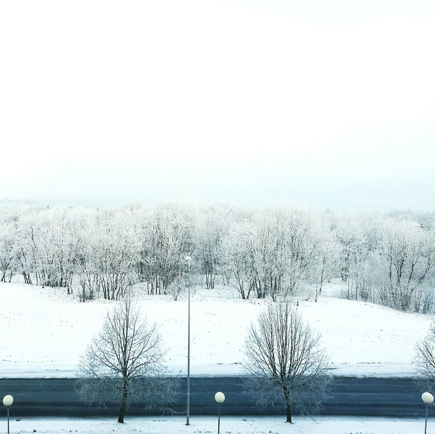 Calming View Frosty Mornings High Angle View Frosted Tree White Trees Winter Trees Snowy Trees Snowy Forest Frosted Forest Frosty Weather