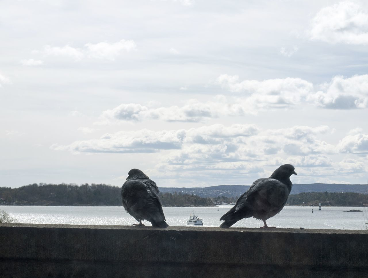 Animal Themes Animal Wildlife Beauty In Nature Bird Cloud - Sky Day Nature Norway Outdoors Perching Pigeons Pigeonslife Sky Togetherness Two Animals Water
