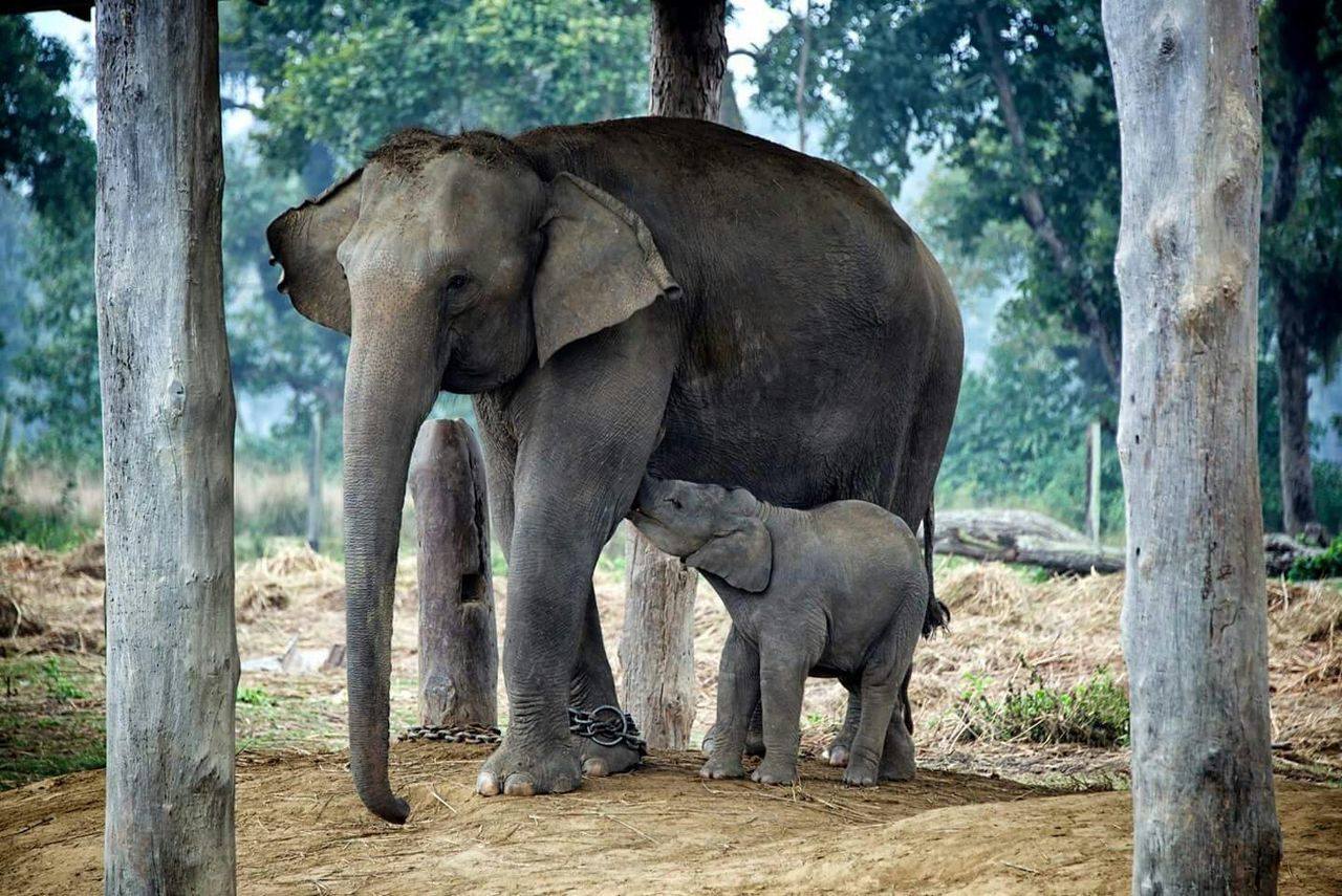 Beautiful stock photos of elephant, , Animal Family, Animal Themes, Animal Trunk