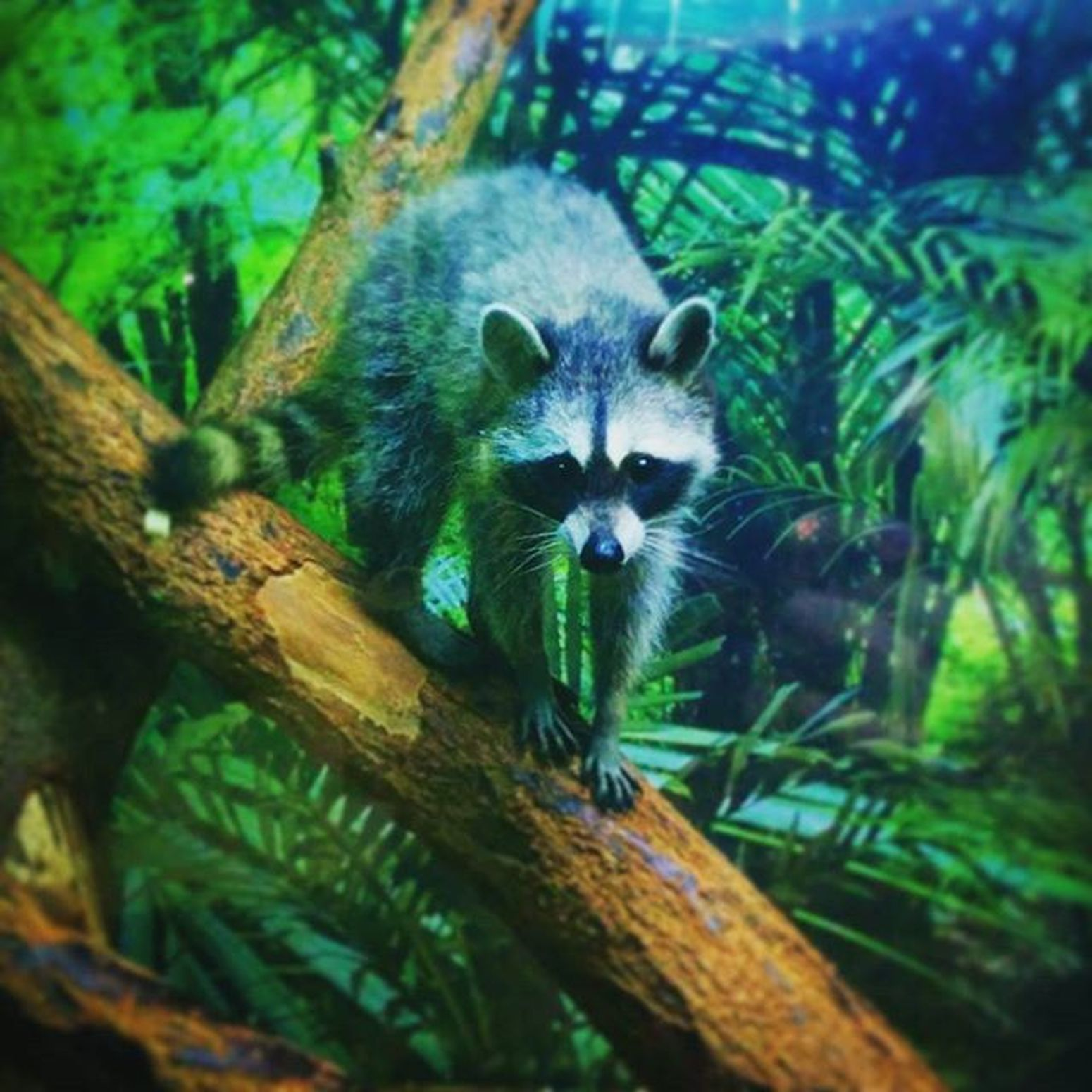Zoo Pet Coolphoto Beautiful Fansy Famous