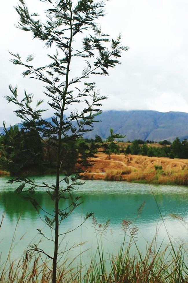 Colombia Pozos Azules Naturaleza Lagos Plantas Lugares
