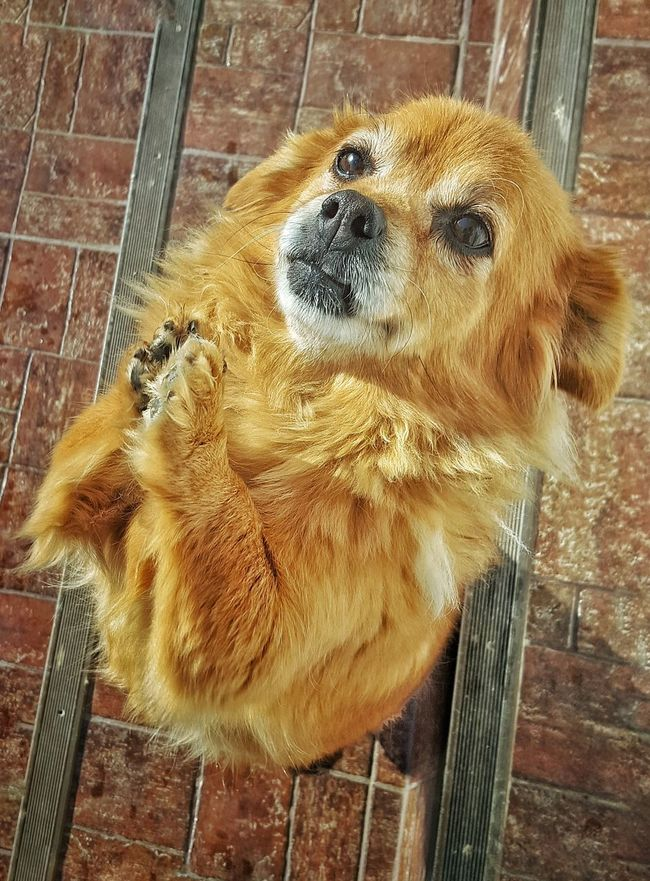 Praying Dog Fluffy Dog Cuteyes Staires Love Friend Paws Loyalty Attention Brown Hair Home Freedom Sunny☀ Shuffle Awesome Caption
