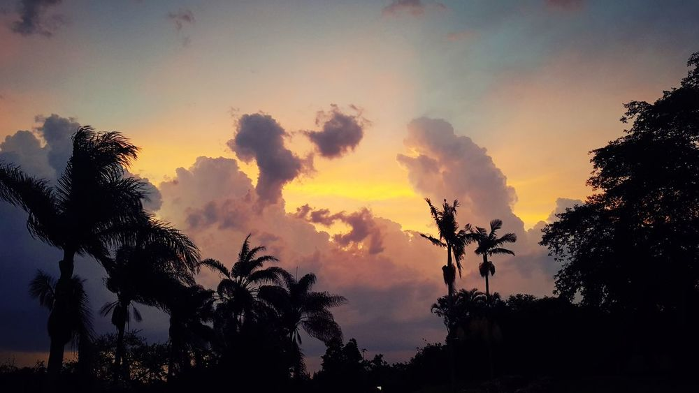 Christmas sunset Sunsets Of South Africa Palm Trees And Sunset Fire And Sky Storm Clouds At Sunset Tree Silhouette Forest Sky Nature No People Day