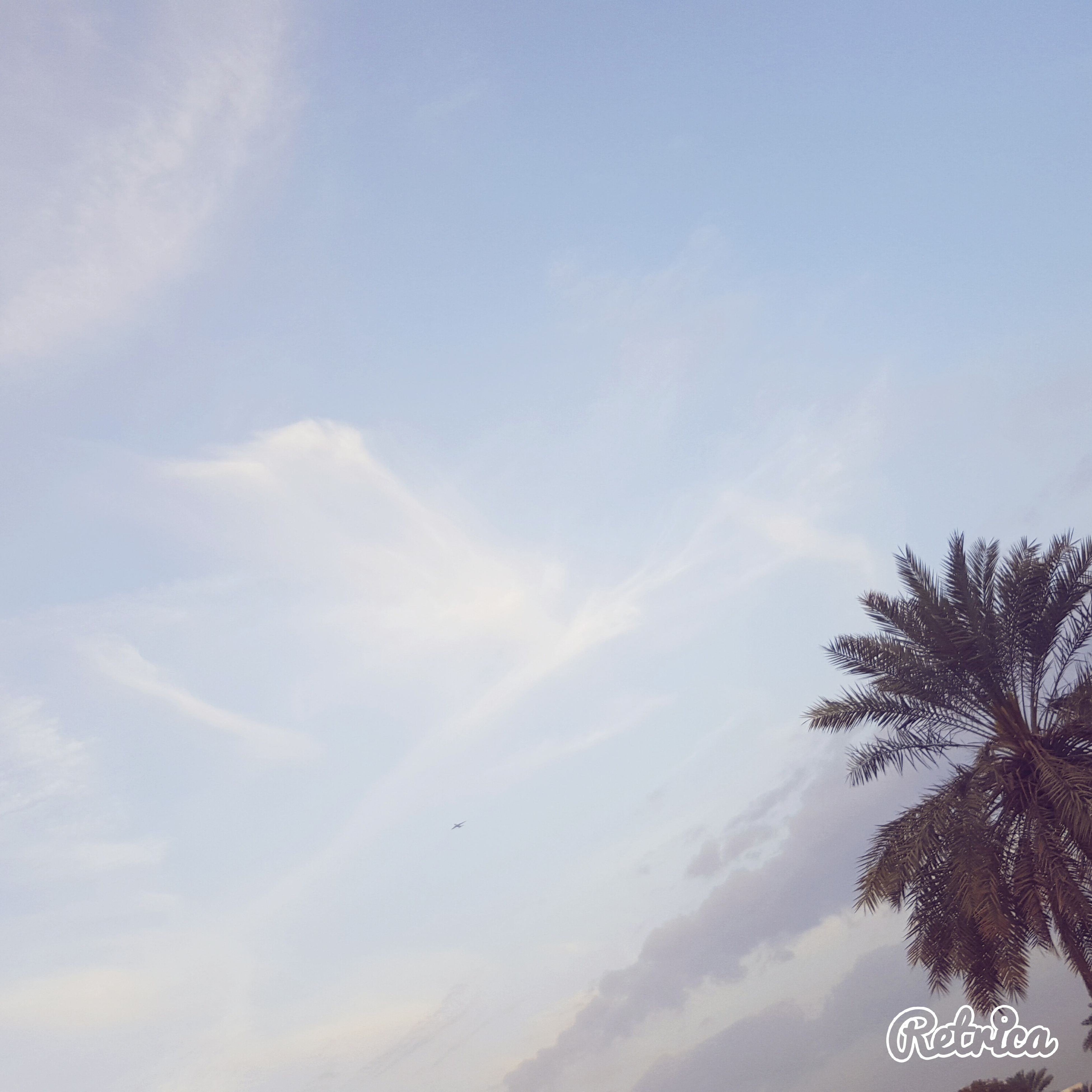 low angle view, sky, flying, tree, cloud - sky, beauty in nature, nature, tranquility, sun, scenics, tranquil scene, sunlight, silhouette, cloud, mid-air, day, outdoors, sunbeam, no people, bird