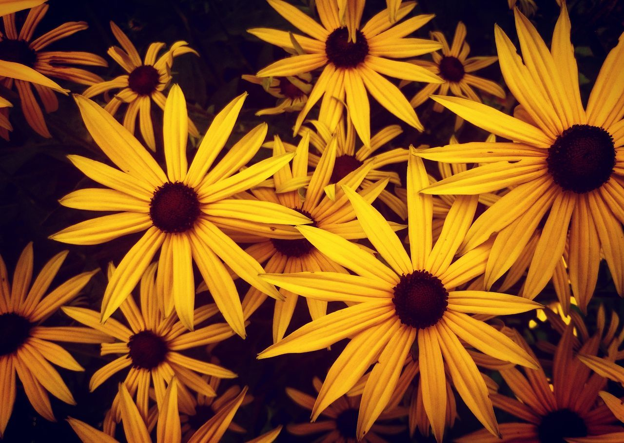 No People Plant Yellow Nature Fragility Flower Petal Flower Head Beauty In Nature Close-up Outdoors Black-eyed Susan Freshness Day Green Flower Photography Naturephotography Flowers Flora Floral Garden Garden Flowers Fresh Bright Bright Colors