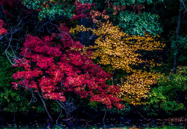 Waltham fall season Autumn Beauty In Nature Boston Day Growth Massachusetts Nature No People Outdoors The 2016 EyeEm Awards Tranquility Waltham
