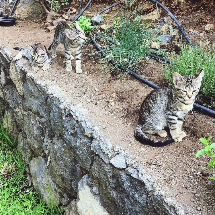 Brothers 😻 Cute Pets Puppies Cats tabby cats