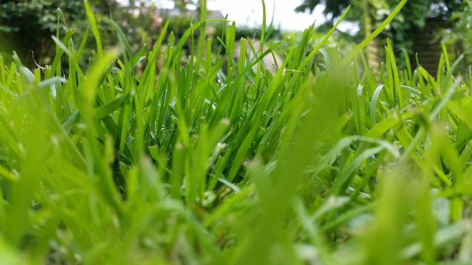 Einfach nur Gras Taking Photos Hanging Out Check This Out Hello World Enjoying Life Hi! Green 2016 EyeEm Awards Lookout Outdoor Photography My Garden My Garden @my Home Beatiful Nature Grüne Oase Nature Garten Ruhe Und Stille Friedlich Natürlichkeit Natürlich Natur Grüner Weg