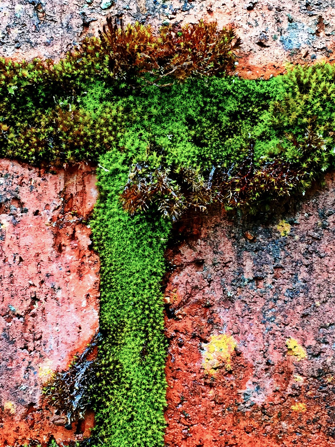 Green Color Growth Day Moss No People Plant Outdoors Nature Ivy Lichen Textured  Algae Full Frame Backgrounds Tree Close-up Leaf Fungus