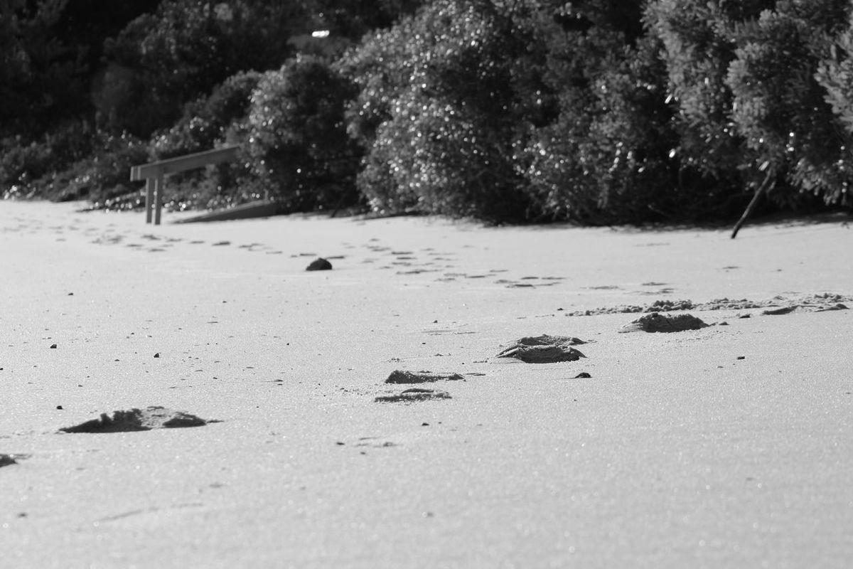 EyeEm Gallery Ocean Seaside Blackandwhite Nelsons Bay Monocrome Beach Winter Eyeem Australia EyeEm Best Shots Australia