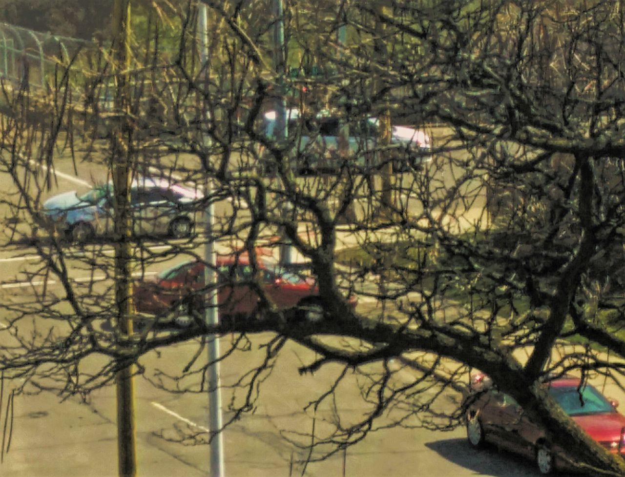 Close-Up Of Branches Against Parked Vehicles