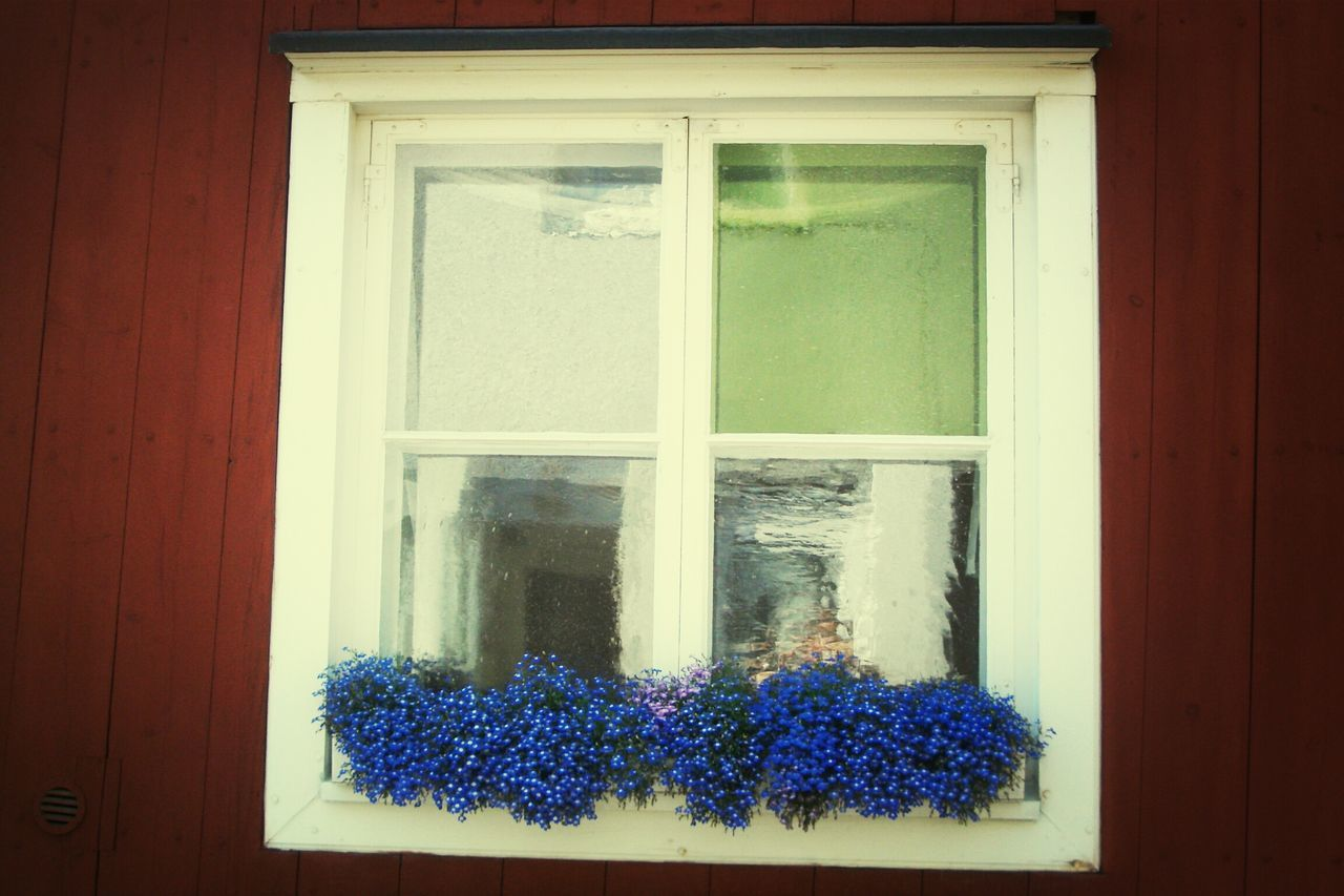 Potted Blue Flowering Plant On Window Of House