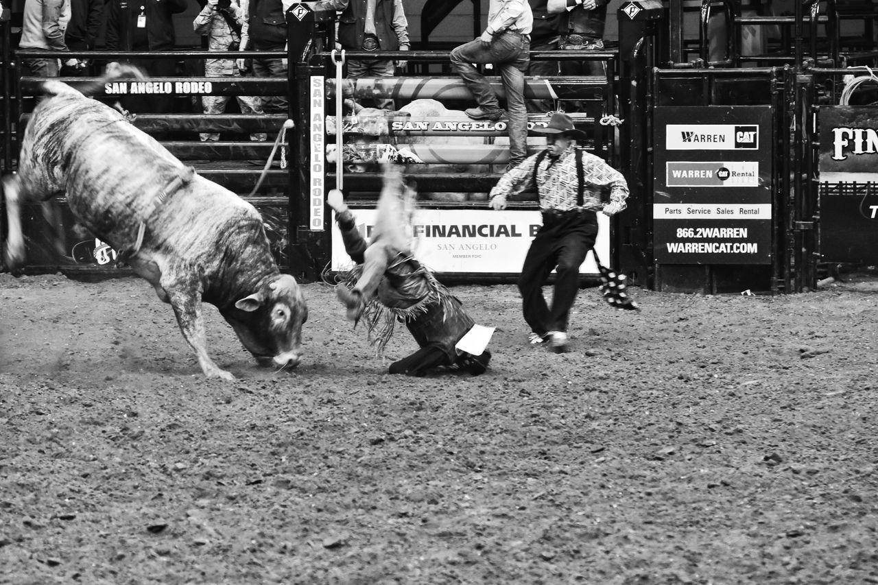 Rodeo Clown Rodeotime This Week On Eyeem Texas Photographer Rodeo Black & White Photography San Angelo Texas EyeEm Gallery Eyeemphotography Bull Riding/rodeo Black And White Collection  Black And White Collection! Livestock