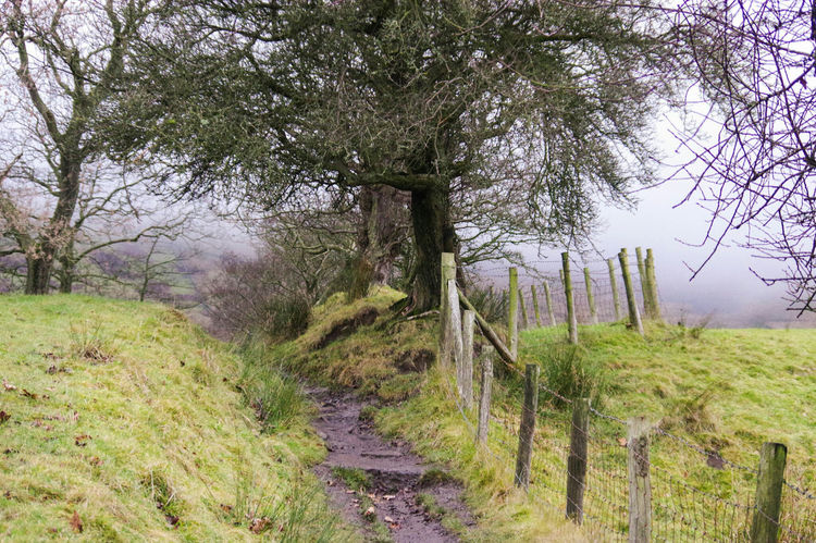 Tree Growth Nature Tranquility Grass Tranquil Scene Green Color Landscape Outdoors Beauty In Nature No People Day Non-urban Scene Field Scenics Sky Lush - Description Forest Foggy Pendle Hill Lancashire Field Green Color My Year My View Beauty In Nature