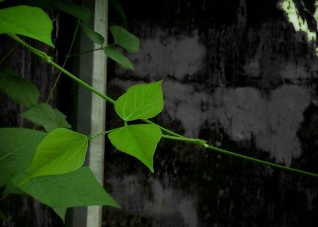 Mobile Photography Mysecretgarden Leaves Green