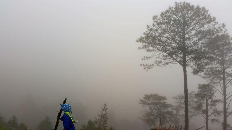Morning Mist | Mt. Purgatory | Philippines The Great Outdoors - 2017 EyeEm Awards EyeEm Nature Lover EyEmNewHere Eyeemphillipines Beauty In Nature Outdoors Philippinesphotography Nature Pinetrees🌲 Foggy Morning EyeEmNewHere