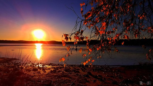 Good afternoon.... Sun Sunset Water Orange Color Scenics Tranquil Scene Sunlight Reflection Tranquility Beauty In Nature Branch Nature Bright Calm Sky Sea Non-urban Scene Shore Lens Flare Vibrant Color