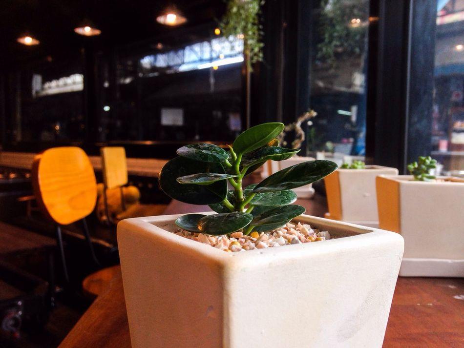ต้นไม้ในร้านกาแฟ