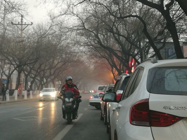Car Bare Tree Transportation Street Tree City People The Way Forward Cold Temperature Adults Only One Person Only Men Adult Young Adult Outdoors One Man Only Day