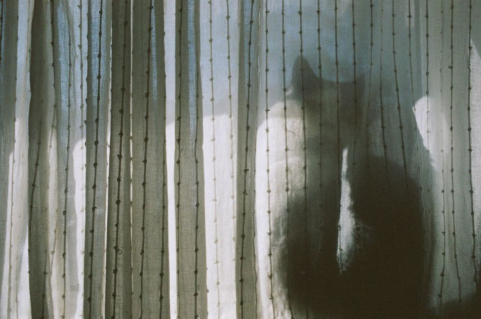 Backgrounds Canon EOS 500N Cat Close-up Curtain Day Feline Film Film Photography Filmisnotdead Full Frame Ishootfilm Kodak Portra 400 No People Pattern Silhouette Break The Mold