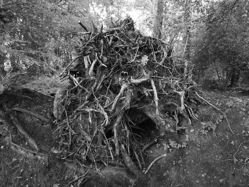 Death, tree, roots, black and white