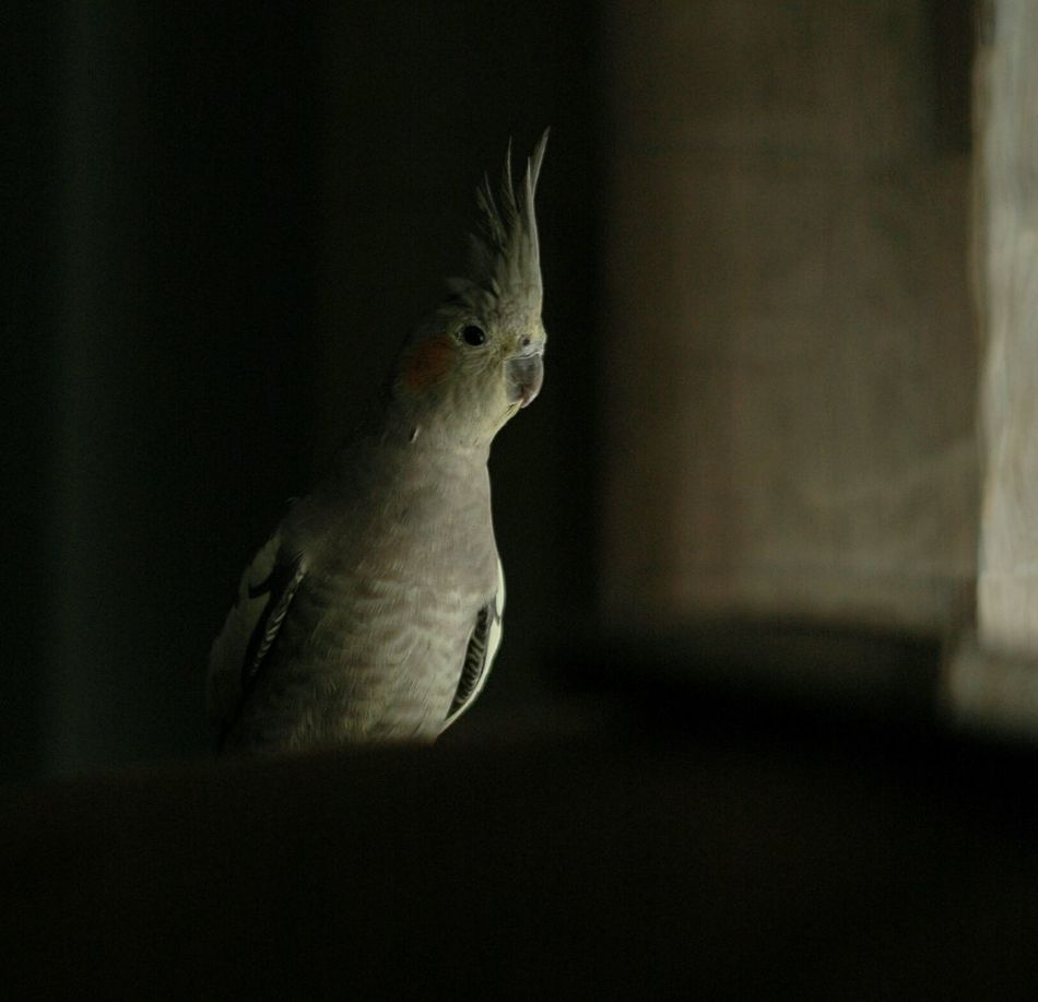 The Purist (no Edit, No Filter) EyeEm Best Shots Mi Pollo Y Yo Streamzoofamily