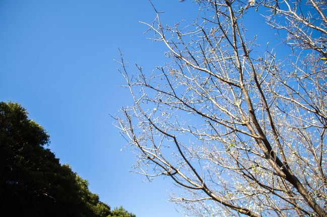 Spring Photography Check This Out Eye4photography  Taking Photos Sunny EyeEm Best Shots Sky OpenEdit Open Edit Trees Nature Nature Photography Eoskissx7i Canon Photooftheday Photographer 八丈島 Hachijo-island Japan Tokyo Enjoying Life Sunny Day Bestoftheday Hello World